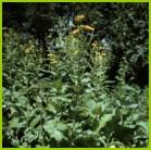 Вопросы радиочувствительности растений