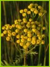 Естественные биогеоценозы